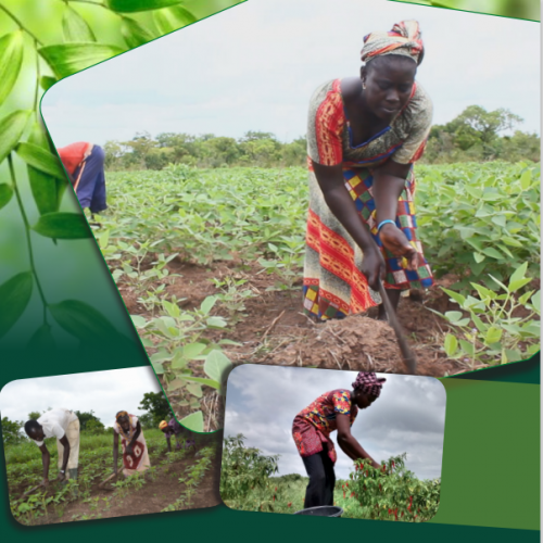 State of Knowledge on CSA in Africa: Synthesis of Regional Case Studies